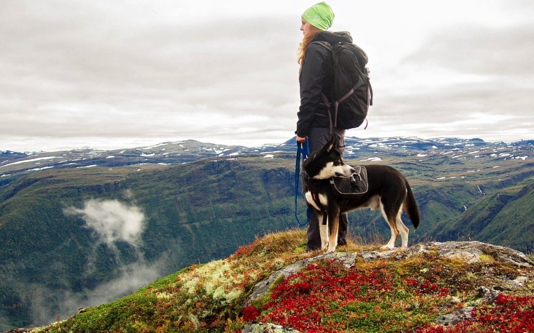 The Best Hiking Backpacks & Accessories for Fun, Safe Trips